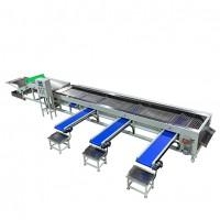 圣女果清洗分级称重流水线 大型设备 机械自动化 自动分拣 效率高