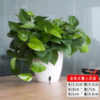 盆景花盆塑料办公桌面自动吸水室内创意家用圆形花盆