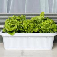 长方形阳台家庭种菜盆 可定制花槽箱种植特大号花盆